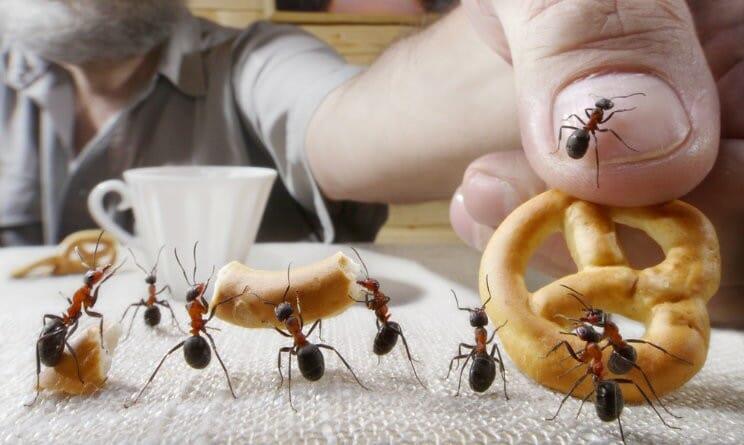 Formiche archivi ineco - Formiche in casa ...